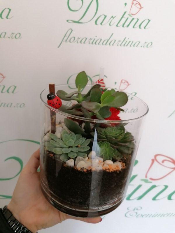 terariu cu plante