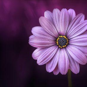 Stii ce semnficatie au florile tale preferate?
