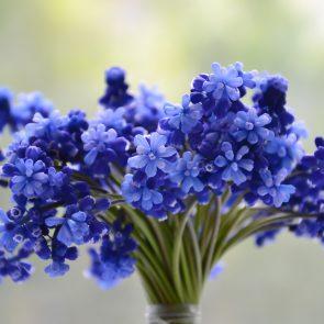 Parfumeaza interiorul casei tale cu ajutorul florilor! 2