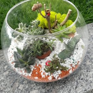 floraria dartina