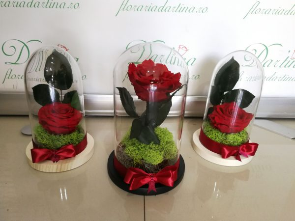 Trandafir cupola mica 1